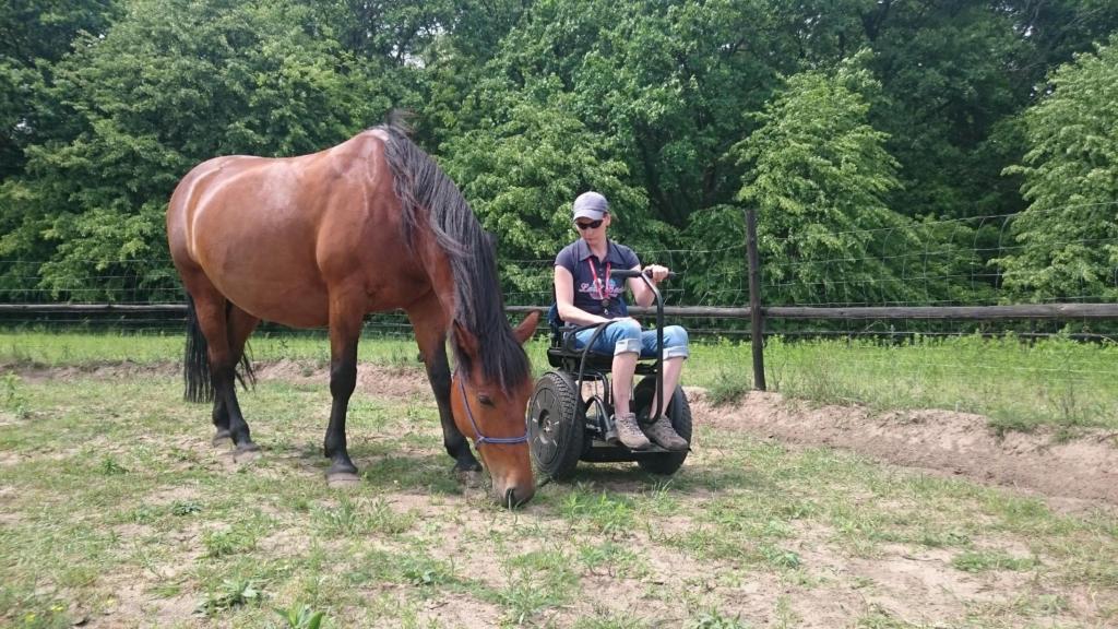 użytkownik wózka elektrycznego Blumil, hipoterapia, wózek elektryczny, wózek inwalidzki